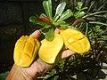 0526Cuisine food in Baliuag Bulacan Province 76.jpg