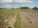 09461jfRoads Paddy fields Domesticated ducks Paligui Candaba Pampangafvf 02.JPG