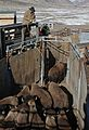 11 of 35 Park staff moving bison in Stephens Creek bison pens 3551 (16384869158).jpg