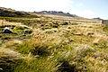 160303-Falkland Islands-78 copy (25337078203).jpg