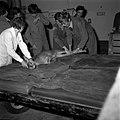 18.05.76 à l'école vétérinaire de Toulouse, opération d'un brocard jeune cerf (1976) - 53Fi891.jpg
