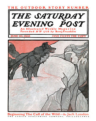 1903 in literature - Cover of the Saturday Evening Post advertising The Call of the Wild, first episode