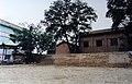 2000年时那两颗老槐树 - panoramio.jpg