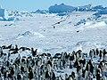 2007 Snow-Hill-Island Luyten-De-Hauwere-Emperor-Penguin-81.jpg