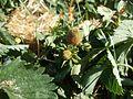 20120525Erdbeeren Ketsch7.jpg