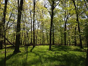 Rutgers Ecological Preserve - Rutgers Ecological Preserve