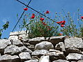20130604 on the Island of Brač 034.jpg