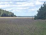 2014-08-18 Turku 05.jpg