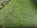 20210623 Hortus botanicus Leiden 55.jpg