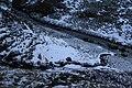 460, Iceland - panoramio (33).jpg