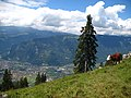 5873 - Schynige Platte - Cows over Interlaken.JPG