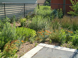 Rain garden - Business parking lot that drains to a rain garden. The curb retains the asphalt pavement, yet lets water flow off the edges.