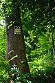 80-361-5028 Kyiv Petro Mohyla Oak SAM 0155.jpg