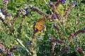 A butterfly near Asen's fortress 01.jpg