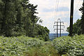 A fir plantation power line at Theydon Mount Essex England.JPG