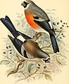 A monograph of the weaver-birds, Ploceidae, and arboreal and terrestrial finches, Fringillidae (1888) (14750238102).jpg