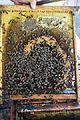 Abejas melíferas en un corte de un panal el Primer Corte de la Miel, en Ayora, Valencia 03.jpg
