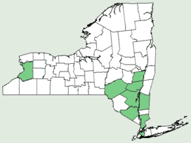 Aethusa cynapium NY-dist-map.png