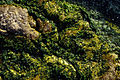 Agva moss 0058 yosun.jpg