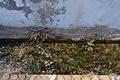 Algar de Palància, séquia al costat del passeig.JPG