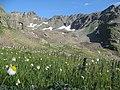 Alpine flora of Kaçkar Dağlari - panoramio.jpg