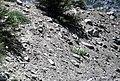 Alpine glacial till (Pleistocene; Lee Vining Canyon, Yosemite National Park, California, USA) 7.jpg