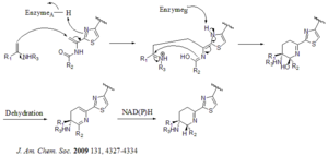 Thiostrepton - Image: Alternative Mechanism for the dehydropiperidine thiopeptides biosynthesis
