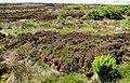 Altikeeragh Nature Reserve near Castlerock (3) - geograph.org.uk - 1911848.jpg