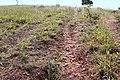 Alto Araguaia - State of Mato Grosso, Brazil - panoramio (267).jpg
