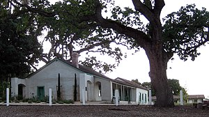 Rancho Santa Rita - Restored Alviso Adobe in Alviso Adobe Community Park, with a large old Valley oak (''Quercus lobata'') tree.