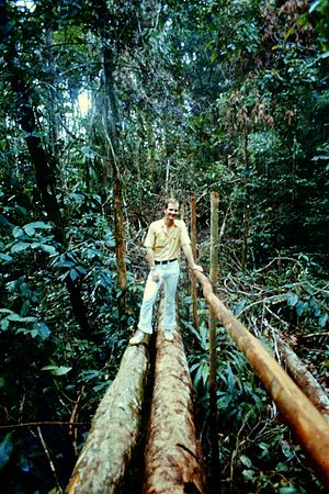 English: a walk in the Amazon rain forest appr...