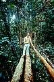 Amazon rain forest1.JPG