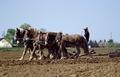 Amish farmer and his team of draft horses, Lancaster, Pennsylvania LCCN2011634177.tif
