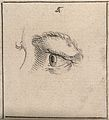 An eye; according to Lavater, belonging to a promising young Wellcome V0009306.jpg