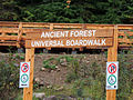 Ancient forest, Rocky Mountains region east of Prince George, BC.jpg