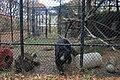 Andean Bear enclosure, Beardsley Zoo, 2009-11-06.jpg