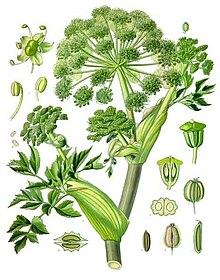 Growing Celery Indoors Never Buy Celery Again  17 Apart