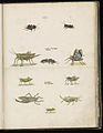 Animal drawings collected by Felix Platter, p2 - (5).jpg