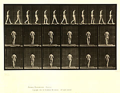 Animal locomotion. Plate 21 (Boston Public Library).jpg
