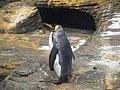 Antwerp Zoo (12210789556).jpg