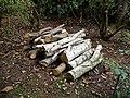 Arboretum logs woodpile at Goodnestone Park Kent England 2.jpg