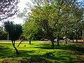 Area verde en el Boulevard. - panoramio.jpg