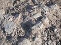 Arkeologisk utgrävning i Fiskeby, den 16 juni 2010p.JPG