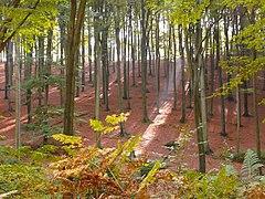 Arnsberger Wald-13.10.10-1.JPG