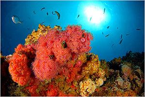 Archipiélago de Juan Fernández National Park - Image: Arrecife Juan Fernandez