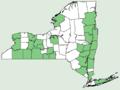 Asclepias quadrifolia NY-dist-map.png