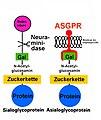 Asgpr (2).jpg