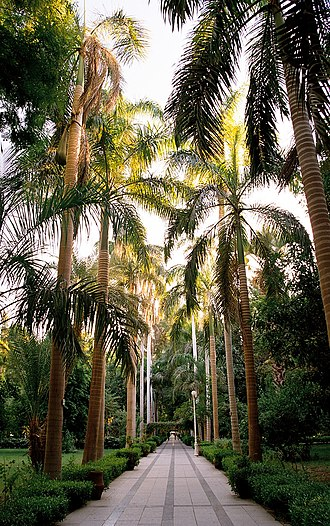 El Nabatat Island - Palm tree allée (landscape avenue), in the Aswan Botanical Garden.