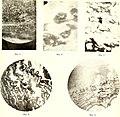 Atti della Accademia gioenia di scienze naturali in Catania (1914) (20160099299).jpg