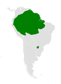 Atticora distribution map.png